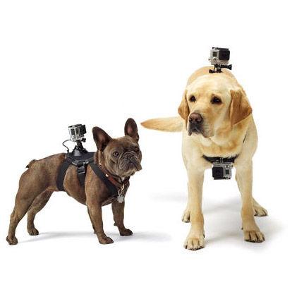 Fetch - Dog Harness
