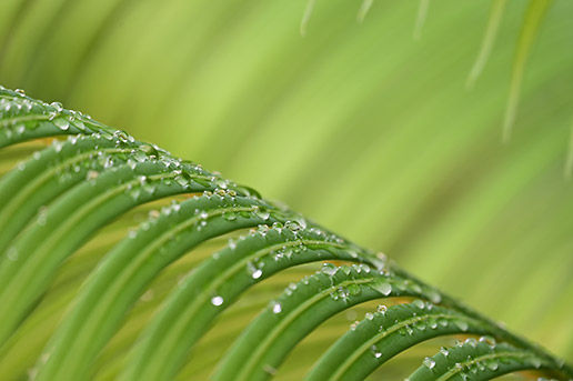 Extreme close-up of water droplets on a leaf