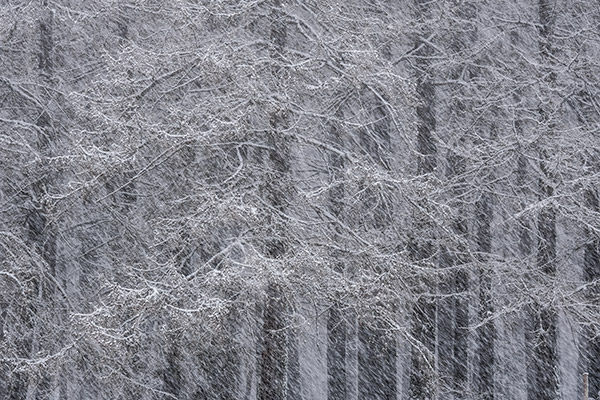sample image of snow covered trees