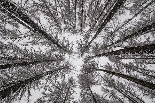 sample image looking up at trees