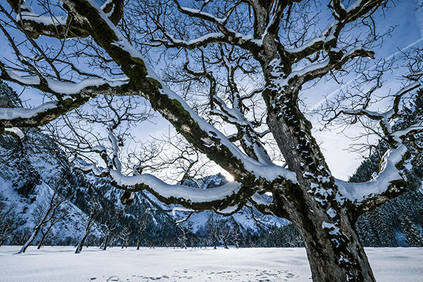 sample image of tree in winter landscape